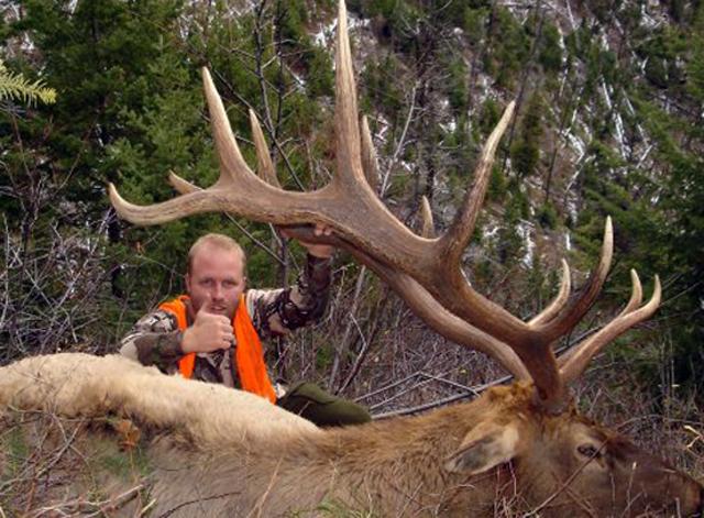Bull Elk hunting Montana