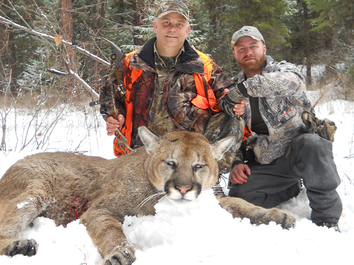 Mountain Lion hunting 2011