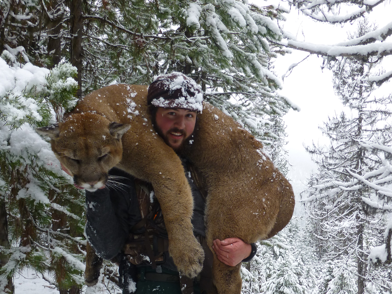 Mountain Lion Hunts